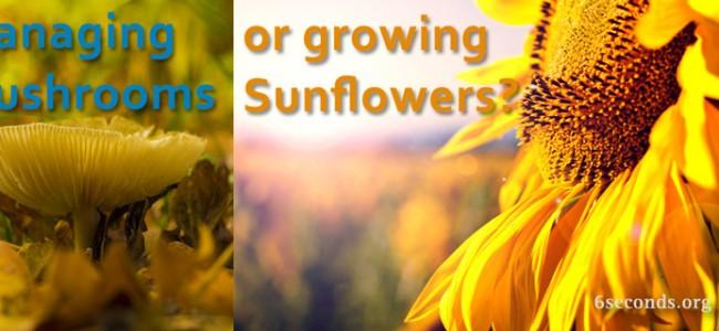 mushrooms-sunflowers